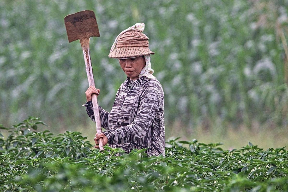 Partner vietnamesischer Kaffee VietBeans