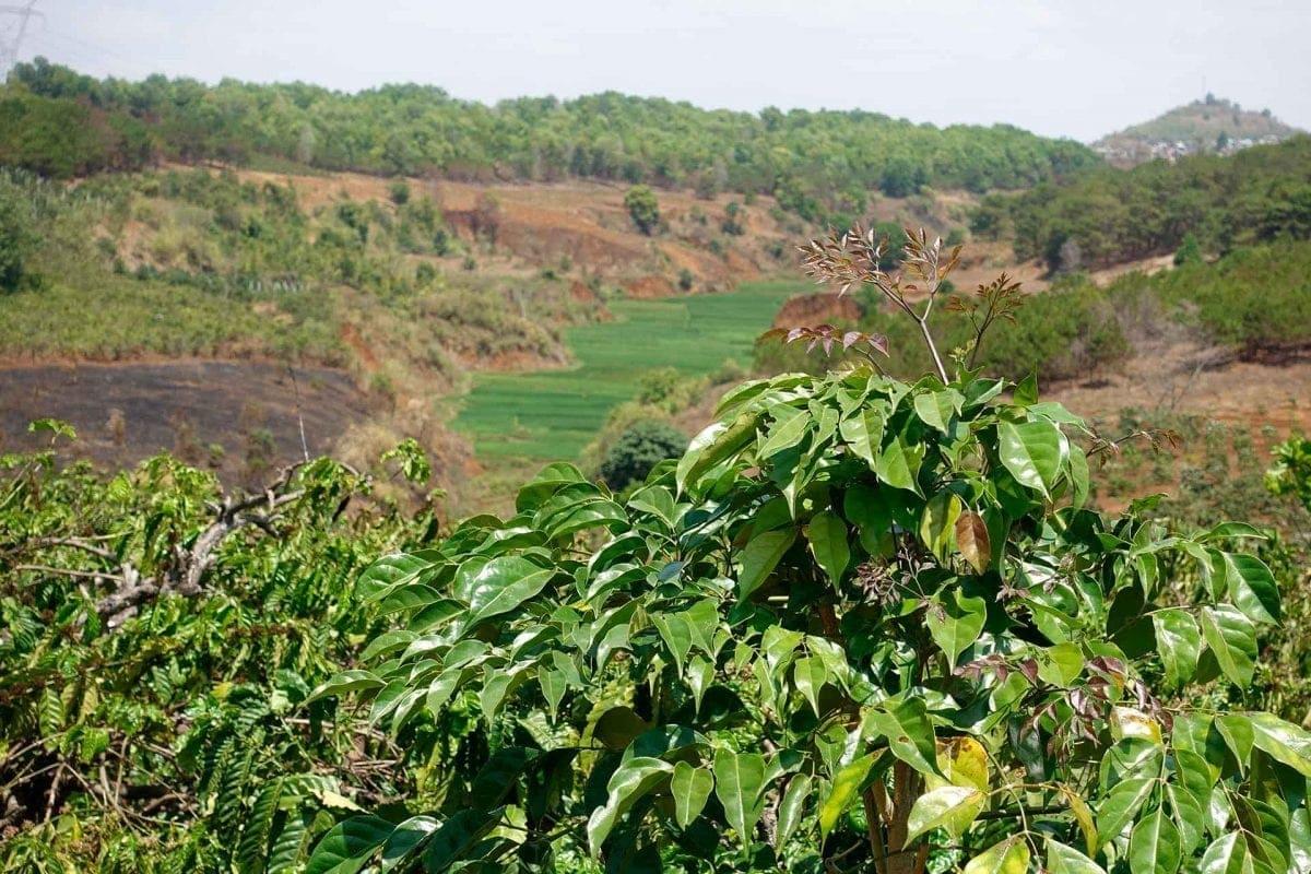 Ausblick ins Tal von den Kaffeefeldern in Pleiku